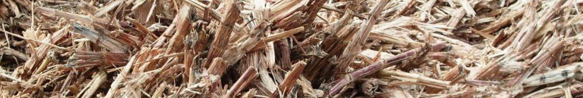 Biomassa 1800 x 411